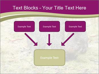 Wombat in Cradle PowerPoint Templates - Slide 70