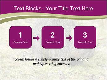 Wombat in Cradle PowerPoint Templates - Slide 71