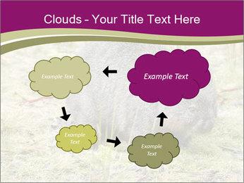 Wombat in Cradle PowerPoint Templates - Slide 72