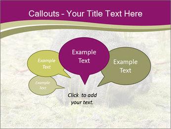 Wombat in Cradle PowerPoint Templates - Slide 73