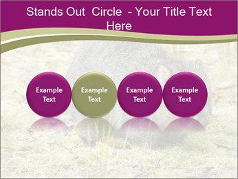 Wombat in Cradle PowerPoint Templates - Slide 76
