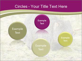 Wombat in Cradle PowerPoint Templates - Slide 77