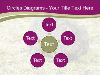 Wombat in Cradle PowerPoint Templates - Slide 78