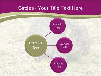 Wombat in Cradle PowerPoint Templates - Slide 79