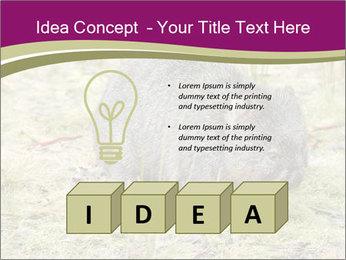 Wombat in Cradle PowerPoint Templates - Slide 80