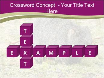 Wombat in Cradle PowerPoint Templates - Slide 82