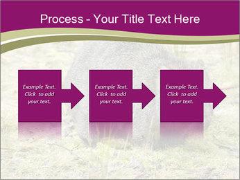 Wombat in Cradle PowerPoint Templates - Slide 88