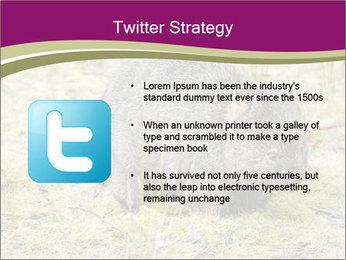 Wombat in Cradle PowerPoint Templates - Slide 9