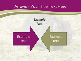 Wombat in Cradle PowerPoint Templates - Slide 90