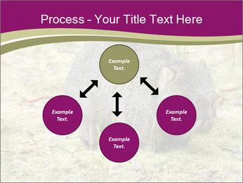 Wombat in Cradle PowerPoint Templates - Slide 91