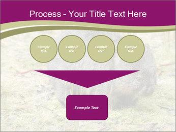 Wombat in Cradle PowerPoint Templates - Slide 93