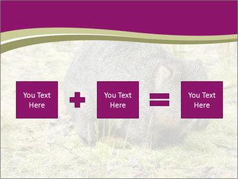 Wombat in Cradle PowerPoint Templates - Slide 95