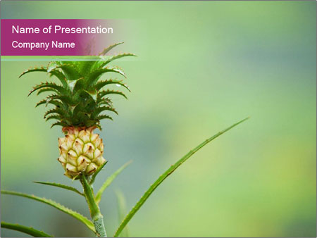 Little pineapple PowerPoint Templates
