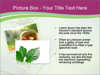 Little pineapple PowerPoint Templates - Slide 20