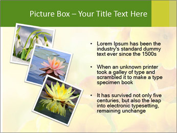 Yellow flowers PowerPoint Template - Slide 17