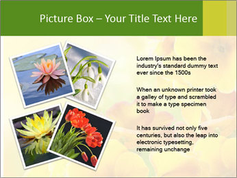 Yellow flowers PowerPoint Template - Slide 23