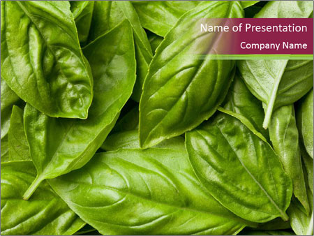 The fresh basil leaves PowerPoint Template