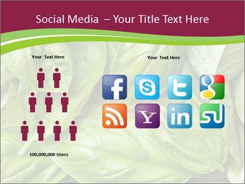 The fresh basil leaves PowerPoint Template - Slide 5