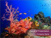 Corals PowerPoint Template