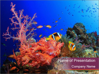 Corals PowerPoint Template - Slide 1