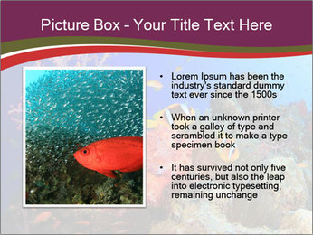 Corals PowerPoint Template - Slide 13