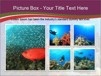 Corals PowerPoint Template - Slide 19