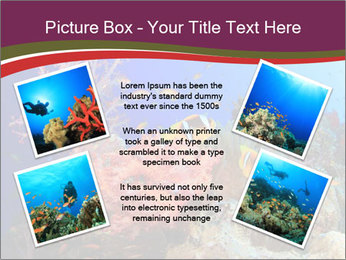 Corals PowerPoint Template - Slide 24