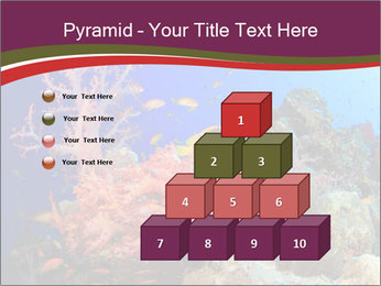 Corals PowerPoint Template - Slide 31