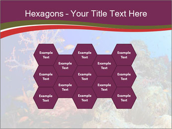 Corals PowerPoint Template - Slide 44