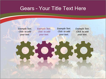 Corals PowerPoint Template - Slide 48