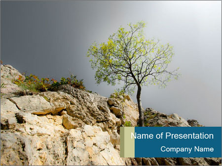 Lonely tree hanging from rocks PowerPoint Templates