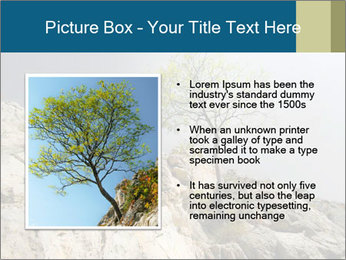 Lonely tree hanging from rocks PowerPoint Templates - Slide 13