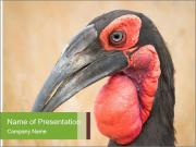 Bird's head PowerPoint Templates