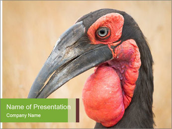 Bird's head PowerPoint Templates - Slide 1