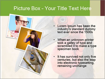 Bird's head PowerPoint Templates - Slide 17