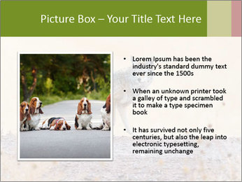 Coyote prowling on the farm PowerPoint Template - Slide 13