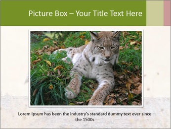 Coyote prowling on the farm PowerPoint Template - Slide 15