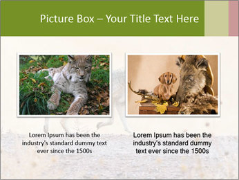 Coyote prowling on the farm PowerPoint Template - Slide 18