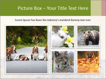 Coyote prowling on the farm PowerPoint Template - Slide 19