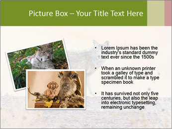 Coyote prowling on the farm PowerPoint Template - Slide 20