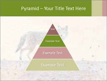 Coyote prowling on the farm PowerPoint Templates - Slide 30