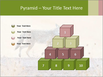 Coyote prowling on the farm PowerPoint Template - Slide 31