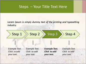 Coyote prowling on the farm PowerPoint Templates - Slide 4