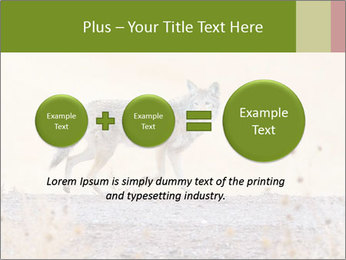 Coyote prowling on the farm PowerPoint Templates - Slide 75