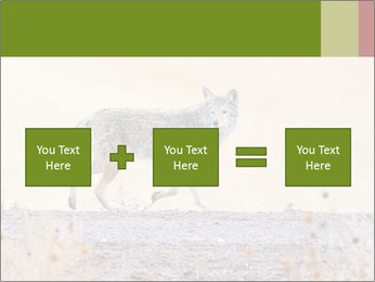 Coyote prowling on the farm PowerPoint Template - Slide 95