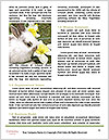 0000088035 Word Template - Page 4