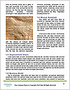 0000088036 Word Template - Page 4