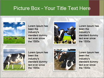 Cows feeding PowerPoint Templates - Slide 14