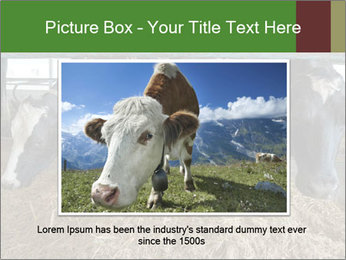 Cows feeding PowerPoint Templates - Slide 15