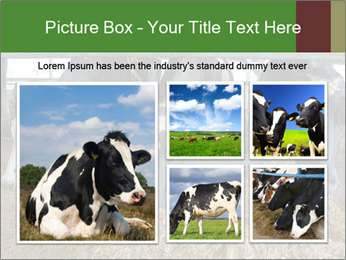 Cows feeding PowerPoint Templates - Slide 19